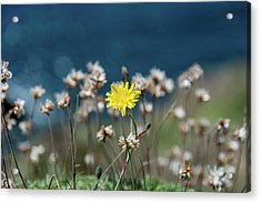 Yellow Acrylic Print by Martina Fagan
