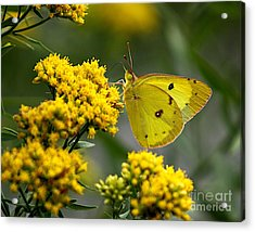 Yellow On Yellow Acrylic Print by Robert Pearson