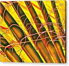 Yellow Palm Fun Acrylic Print by Gwyn Newcombe