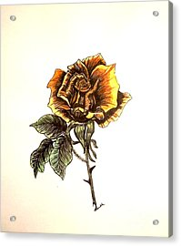 Yellow Rose Acrylic Print by Nancy Rucker