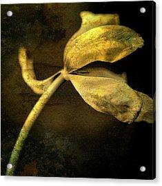 Yellow Tulip Acrylic Print by Bernard Jaubert