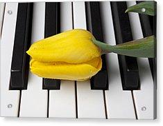 Yellow Tulip On Piano Keys Acrylic Print by Garry Gay