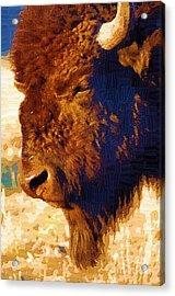 Yellowstone Buffalo Acrylic Print by Diane E Berry