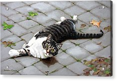 You Called? Acrylic Print by Sandra Chase