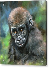 Young Gorilla Acrylic Print by David Stribbling