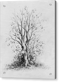 Young Tree Acrylic Print by Rachel Christine Nowicki