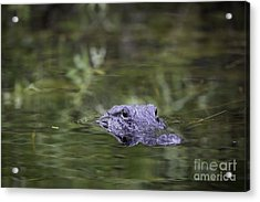 You're Being Watched Acrylic Print by Brian Jannsen