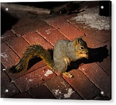 You're Nuts Acrylic Print by Jamie Lindenmeier
