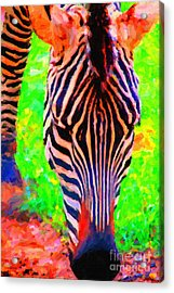 Zebra . Photoart Acrylic Print by Wingsdomain Art and Photography