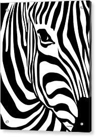 Zebra Acrylic Print by Ron Magnes