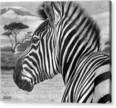 Zebra Acrylic Print by Tim Dangaran