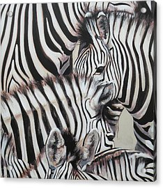 Zebra Triptyche Left Acrylic Print by Leigh Banks