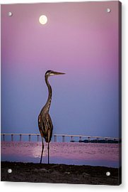 Zen Acrylic Print by David Kulp