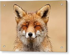 Zen Fox Red Fox Portrait Acrylic Print by Roeselien Raimond