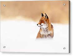 Zen Fox Series - Zen Fox In Winter Mood Acrylic Print by Roeselien Raimond