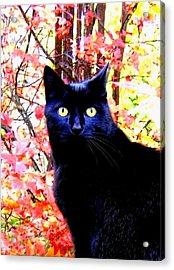 Ziggy Acrylic Print by Will Borden
