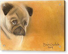 Zooey The Pug Acrylic Print by Dindin Coscolluela