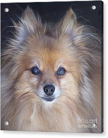 Zoom Acrylic Print by Brian  Commerford