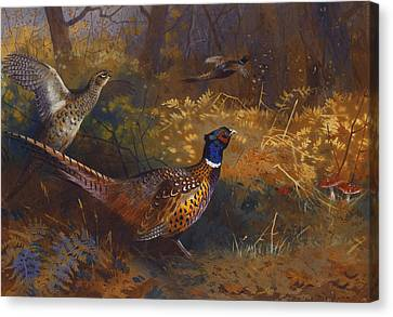 A Cock And Hen Pheasant At The Edge Of A Wood Canvas Print by Archibald Thorburn