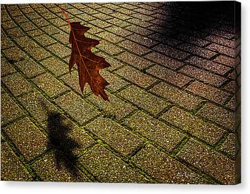 Autumnal Equinox Canvas Print by Bob Orsillo