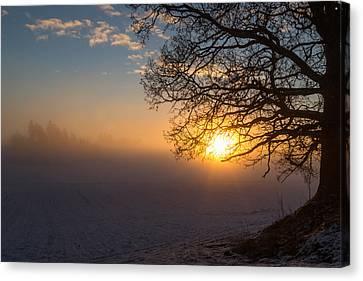 Sunbeams Pour Through The Tree At The Misty Winter Sunrise Canvas Print by Aldona Pivoriene
