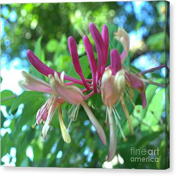 Birth Of Clematis Canvas Print by Luther   Fine Art