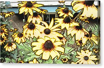 Black-eyed Susan Sketch Canvas Print by Beverly Guilliams