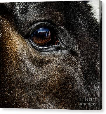 Bright Eyes - Horse Portrait Canvas Print by Holly Martin