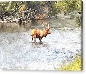 Elk In The Water National Bison Range  Canvas Print by Larry Stolle