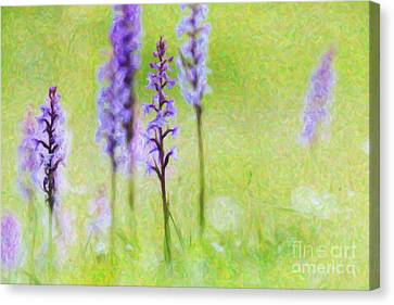 Fragrant Orchids Canvas Print by Tim Gainey