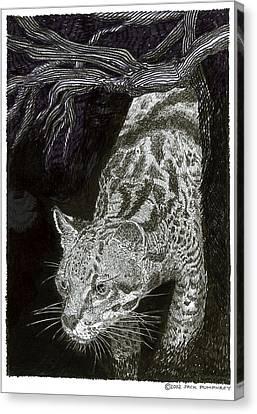 Jacaranda Of Northern Mexico Canvas Print by Jack Pumphrey