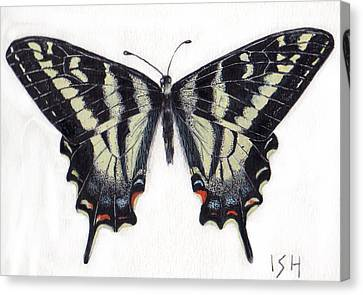 Swallowtail Butterfly  Canvas Print by Inger Hutton