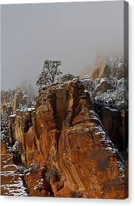 The Lone Tree In Oak Creek Canvas Print by Tom Kelly