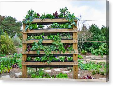 Vegetable Garden 1 Canvas Print by Lanjee Chee