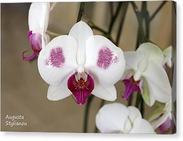 White Orchids And Landscape Canvas Print by Augusta Stylianou