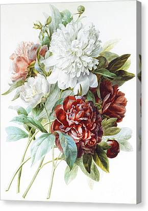A Bouquet Of Red Pink And White Peonies Canvas Print by Pierre Joseph Redoute