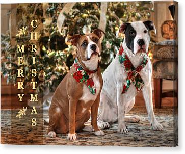 A Bubba And Kensie Christmas Canvas Print by Shelley Neff