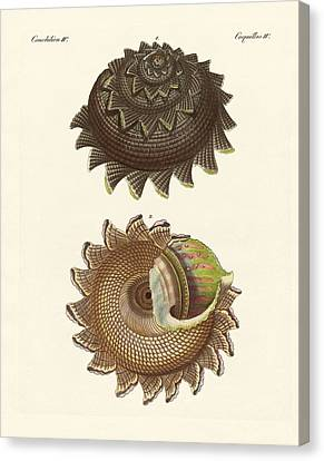 A Rare Mollusk Shell Of The South Sea Canvas Print by Splendid Art Prints