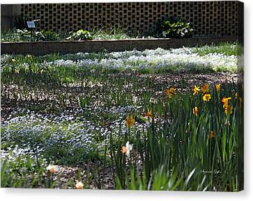 A Very Special Garden V Canvas Print by Suzanne Gaff