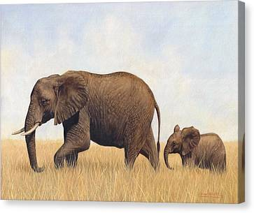African Elephants Canvas Print by David Stribbling