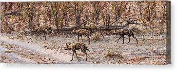 African Wild Dogs Lycaon Pictus Canvas Print by Panoramic Images
