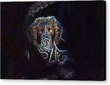Bow Wow Canvas Print by Dave Byrne