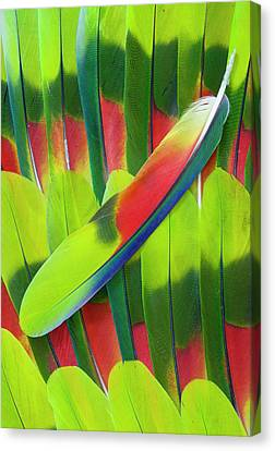 Amazon Parrot Tail Feather Design Canvas Print by Darrell Gulin