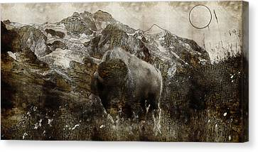 American Bison In The Rockies Canvas Print by Adam Asar