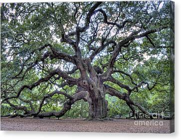 Angel Oak Canvas Print by Dustin K Ryan