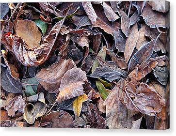 Autumn Leaves Canvas Print by Mark Severn
