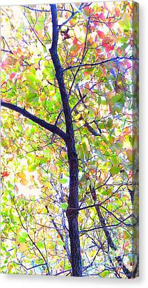 Autumn Leaves Canvas Print by Scott Cameron