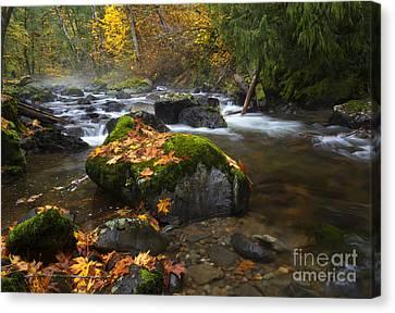 Autumn Stream Canvas Print by Mike Dawson