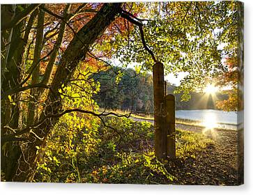 Autumn Trail Canvas Print by Debra and Dave Vanderlaan