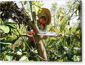 Avocado Plantation. Canvas Print by Photostock-israel